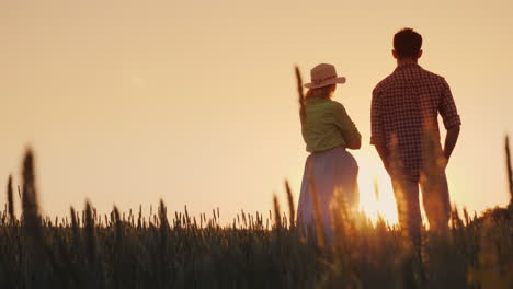 Two-Farmers-Man-And-Woman-Standing-In-A-Wheat-Field-Watching-The-Sunset-Lower-View-Angle-4K-Video