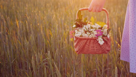 A-Woman-Carries-A-Basket-With-Wild-Flowers-In-Her-Hand-There-Is-A-Green-Meadow-Beautiful-Glare-Of-Th