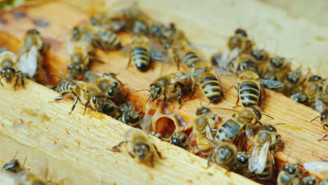 A-Large-Hive-Of-Bees-Is-Working-Together-To-Collect-Honey-In-The-Garden