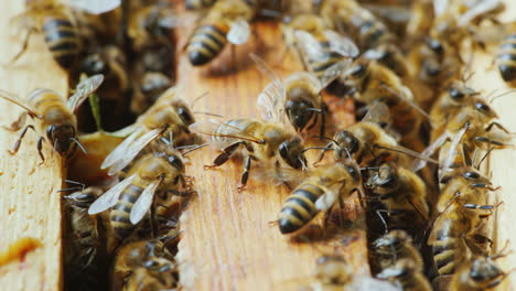 A-Lot-Of-Bees-Work-In-A-Hive-To-Create-A-Delicious-Honey-Close-Up-Ecologically-Clean-Production