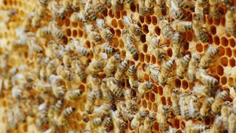 A-Lot-Of-Bees-Work-In-The-Hive-Background-About-Beekeeping