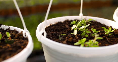 Potted-Plants-On-Table-In-Greenhouse-7