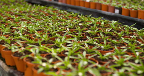Potted-Plants-Growing-In-Greenhouse-Agriculture-3