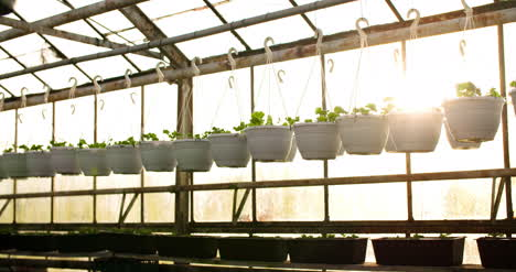 Potted-Plants-Hanging-At-Greenhouse-2