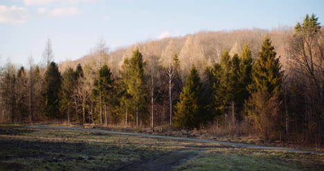 Trees-Moving-On-Wind-In-Spring-1