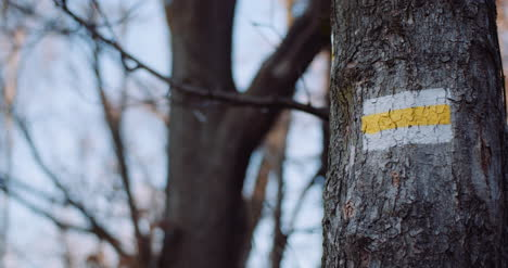 Trail-Sign-In-The-Mountains-On-A-Tree
