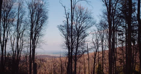 Branches-Of-Trees-In-Mountains-In-Winter-1