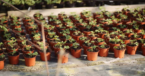 Flower-And-Vegetable-Seedlings-In-The-Greenhouse-1