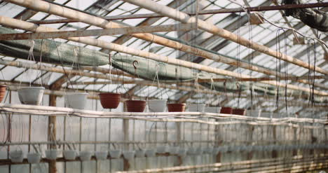 Agriculture-Sorted-Pots-With-Seedlings-In-Greenhouse-2