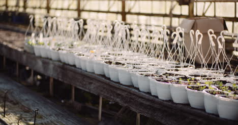 Agriculture-Sorted-Pots-With-Seedlings-In-Greenhouse-3