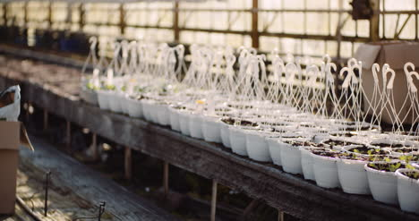 Agriculture-Sorted-Pots-With-Seedlings-In-Greenhouse-4