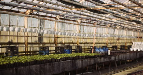 Agriculture-Sorted-Pots-With-Seedlings-In-Greenhouse-5