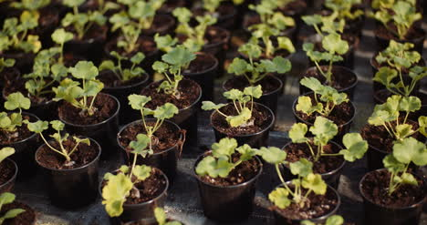 Flower-And-Vegetable-Seedlings-In-The-Greenhouse-2