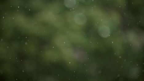Raining-Rain-On-Forest-Background
