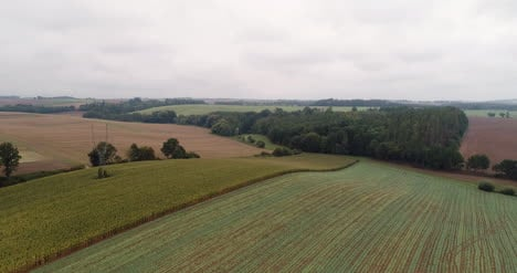 Aerial-View-Of-Agricultural-Fields-And-Forest-6