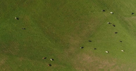 Aerial-View-Of-Cows-Grazing-On-Farm-1