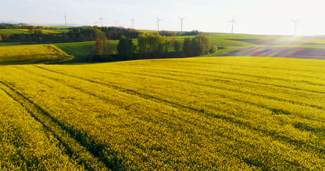 Power-Technology-Windmills-Farm-