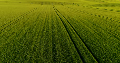 Stunning-Aerial-Shot-Over-Lush-Green-Fields-And-Meadows-In-The-Countryside-Gmo-Free-Wheat-Field-