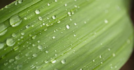 Close-Up-Of-Waterdrops-On-Plant-Leaves