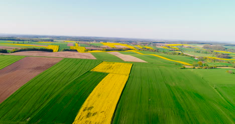 Fields-With-Various-Types-Of-Agriculture-4K-9
