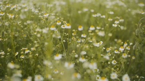 Fresh-Summer-Meadow-