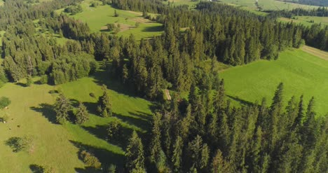 Flying-Over-The-Beautiful-Forest-Trees-Landscape-Panorama-5