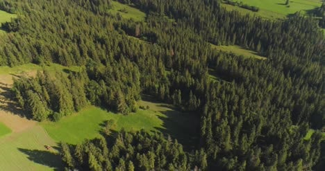 Flying-Over-The-Beautiful-Forest-Trees-Landscape-Panorama-29