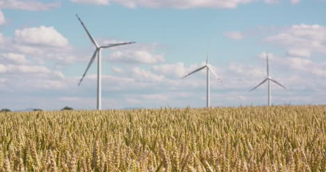 Wheat-Field-Against-Windmills-1