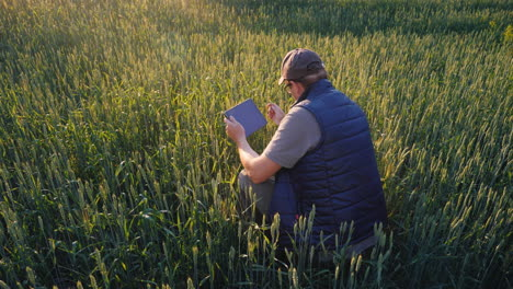 A-Male-Farmer-Is-Studying-The-Spikelets-Of-Young-Wheat-Uses-A-Tablettechnologies-In-Agribusiness-4K-