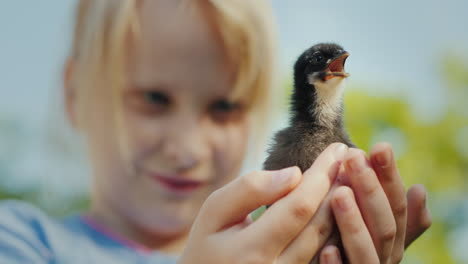 Portrait-Of-A-Little-Girl-Holding-A-Small-Chicken-Life-On-The-Farm-Concept-4K-Video