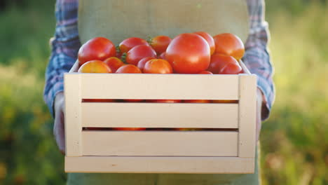 The-Farmer-Is-Holding-A-Wooden-Box-With-Tomatoes-Fresh-Farm-Products-4K-Video