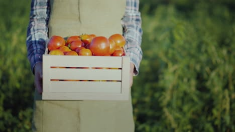 The-Farmer-Is-Holding-A-Wooden-Box-With-Tomatoes-Fresh-Farm-Products