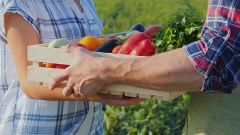 A-Woman-Takes-A-Box-Of-Vegetables-From-The-Farmer-s-Hands-Fresh-Vegetables-Directly-From-The-Field