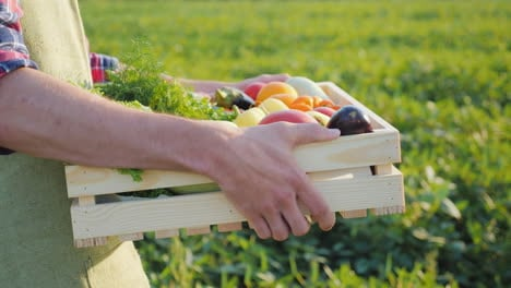 A-Worker-Carries-A-Box-Of-Vegetables-Along-The-Field-Fresh-Vegetables-From-Farming