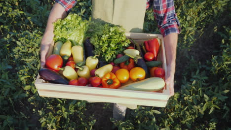 The-Farmer-Is-Holding-A-Wooden-Box-With-A-Set-Of-Various-Vegetables-Organic-Farming-And-Farm-Product