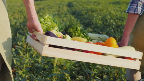 Two-Farmers-Are-Carrying-A-Box-Of-Fresh-Vegetables-Across-The-Field-Vegetable-Harvest-Concept
