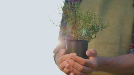 The-Farmer\-s-Hands-Hold-A-Pot-Of-Thyme-Plant-Fresh-Spices-From-The-Bio-Farm