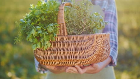 Hands-Of-A-Farmer-Holding-A-Basket-Of-Greens-And-Spices