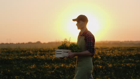 A-Man-Is-A-Farmer-Walking-In-His-Own-Field-Carrying-A-Box-Of-Vegetables-And-Greens-4K-Video