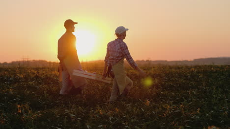 Two-Farmers-Carry-A-Heavy-Box-With-Vegetables-Across-The-Field-Steadicam-Slow-Motion-Video