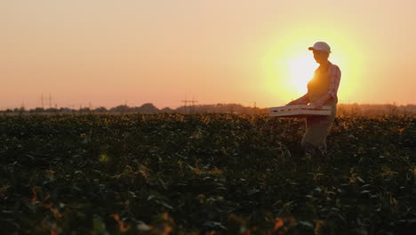 Woman-Farmer-Carries-A-Box-With-Vegetables-On-The-Field-At-Sunset-4K-Video