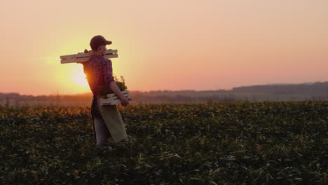A-Young-Farmer-Carries-A-Box-With-Greens-And-Spices-Goes-By-Its-Field-4K-Video
