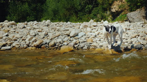 The-Dog-Tries-To-Overcome-The-Rough-Mountain-River-Fear-Prevents-Her-From-Doing-This