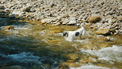 A-Brave-Dog-Tries-To-Cross-A-Rough-Mountain-River