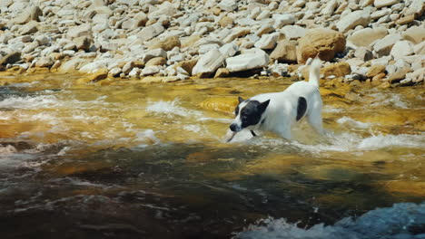 A-Dog-Tries-To-Swim-Across-The-Stormy-Waters-Of-A-Mountain-River