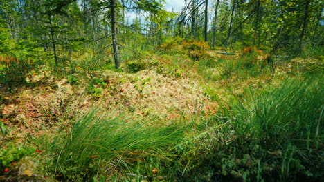 An-Amazing-Swamp---Fallen-Trees-Moss-And-Green-Grass-Pristine-Places-On-The-Planet-Pov-Video