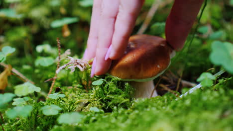 A-Man-Gently-Cuts-A-White-Mushroom-In-A-Forest-With-A-Knife-Mushroom-Picking-In-The-Forest