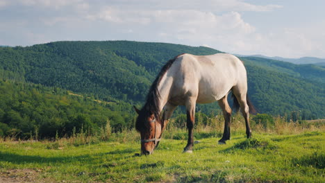 Several-Horses-Graze-In-A-Picturesque-Valley-Against-The-Backdrop-Of-The-Mountains-Green-Tourism-Con