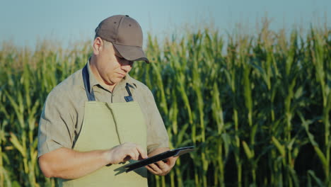 A-Middle-Aged-Farmer-Working-In-A-Field-With-A-Tablet-Against-A-Background-Of-High-Shoots-Of-Corn