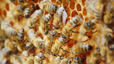 Ecologically-Clean-Production-Bees-Are-Engaged-In-The-Production-Of-Delicious-Honey-From-A-Natural-P